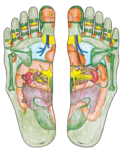Fußreflexzonen n. Hanne Marquardt