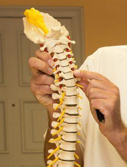 Osteopathie an der Wirbelsäule erklärt